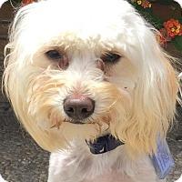 Adopt A Pet :: Orville - Santa Cruz, CA