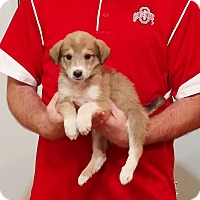 Adopt A Pet :: Sadie - South Euclid, OH
