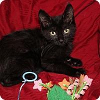 Adopt A Pet :: Merlin - Wichita, KS