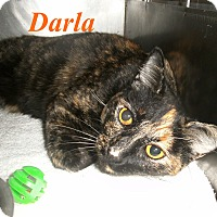 Adopt A Pet :: Darla - El Cajon, CA