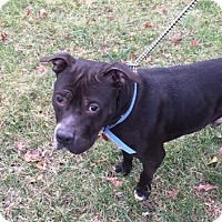 Adopt A Pet :: Leo - Glenolden, PA