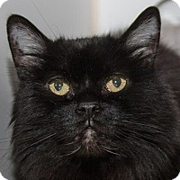 Adopt A Pet :: Blanche - Prescott, AZ