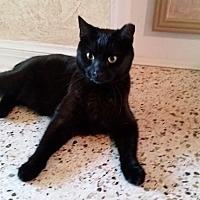 Adopt A Pet :: Penny Lane (Pretty Boy) - Tampa, FL