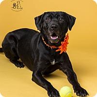 Adopt A Pet :: Molly - Coppell, TX