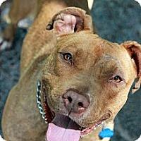 Adopt A Pet :: Ellie - Tinton Falls, NJ