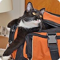 Adopt A Pet :: Jax N Sox - Davis, CA