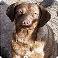 Adopt A Pet :: Cocoa - Glenpool, OK