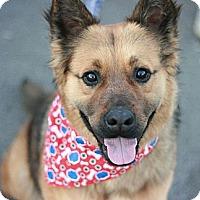 Adopt A Pet :: Jingles - Canoga Park, CA