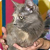 Adopt A Pet :: Ewok - Mobile, AL