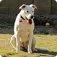 Adopt A Pet :: SNOW WHITE - Phoenix, AZ