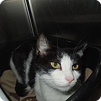 Adopt A Pet :: Helena - Medina, OH