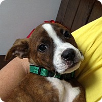 Adopt A Pet :: Pepper - Marietta, GA