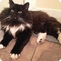 Adopt A Pet :: Hagrid - Vancouver, BC
