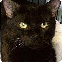 Adopt A Pet :: Fudgie - Medway, MA