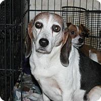 Adopt A Pet :: Bonnie - Crandall, GA