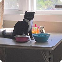 Adopt A Pet :: Black Beard - Windsor, CT