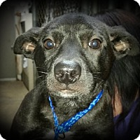 Adopt A Pet :: Hallie - Brattleboro, VT
