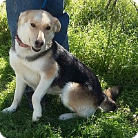 Adopt A Pet :: Judy - Carthage, NC