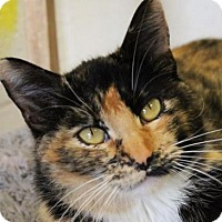 Adopt A Pet :: NELLY - Red Bluff, CA