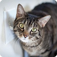 Adopt A Pet :: Kitty - Boise, ID