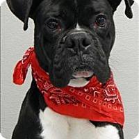 Adopt A Pet :: Lucky - Topeka, KS