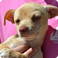 Adopt A Pet :: Joseph - Simi Valley, CA