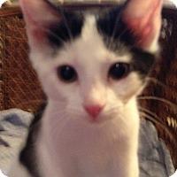 Adopt A Pet :: Baxter - Germantown, MD