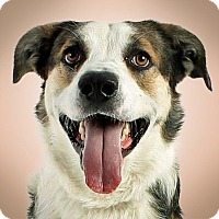 Adopt A Pet :: Tebow - Prescott, AZ