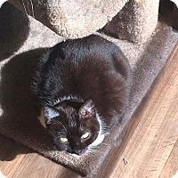 Adopt A Pet :: Shasta - Aurora, IN