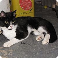 Adopt A Pet :: BIBSY - Millerstown, PA