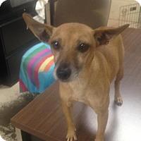 Adopt A Pet :: Pinky - Albemarle, NC