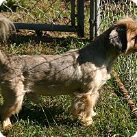 Adopt A Pet :: Barnery - Waldorf, MD