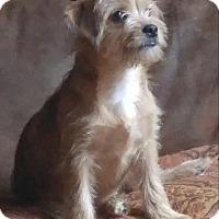Adopt A Pet :: Pippa - Arden, NC
