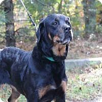 Adopt A Pet :: PATSY - Wainscott, NY