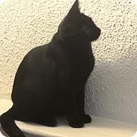 Adopt A Pet :: Rockford 5 (Haley) - Barrington Hills, IL