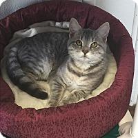 Adopt A Pet :: Daisy - Greensburg, PA