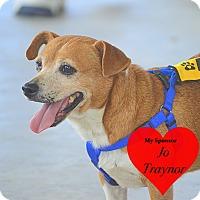 Adopt A Pet :: Chewie - San Leon, TX