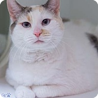 Adopt A Pet :: Maureen Declaw - Fairfax, VA