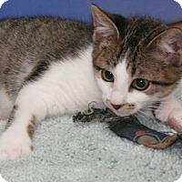 Adopt A Pet :: Johnny - DFW Metroplex, TX