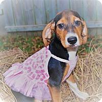 Adopt A Pet :: SuperWoman - Waupaca, WI