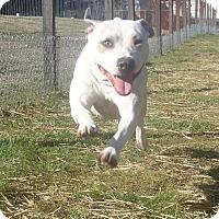 Adopt A Pet :: ZuZu - Newport, NC
