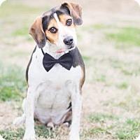 Adopt A Pet :: Moses - Greensboro, NC
