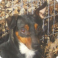Adopt A Pet :: Potter - Jacksonville, FL