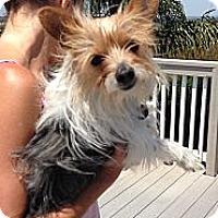 Adopt A Pet :: Murphy - Rescue, CA