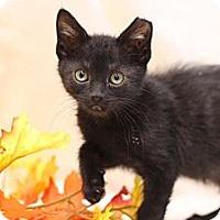 Adopt A Pet :: Boo! - Sacramento, CA