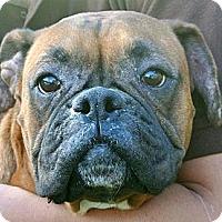 Adopt A Pet :: Jasmine - white settlment, TX
