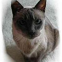 Adopt A Pet :: Ella - Montgomery, IL