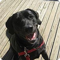 Adopt A Pet :: Emma***URGENT*** - Shrewsbury, NJ