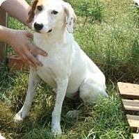 Adopt A Pet :: Julie (URGENT) Reduced - Brattleboro, VT