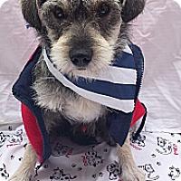 Adopt A Pet :: DONNIE - Irvine, CA